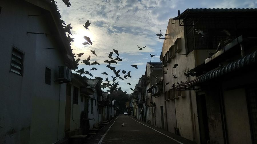 The group of pigeon fly to nest. This picture taken by using Xiaomi Redmi Note 4 Xiaomiography Xiaomi Redmi Note 4 Xiaomiphotography Cloud - Sky The Way Forward Residential District Street Diminishing Perspective Nature No People Outdoors Animal Themes Vertebrate Animal Bird Day