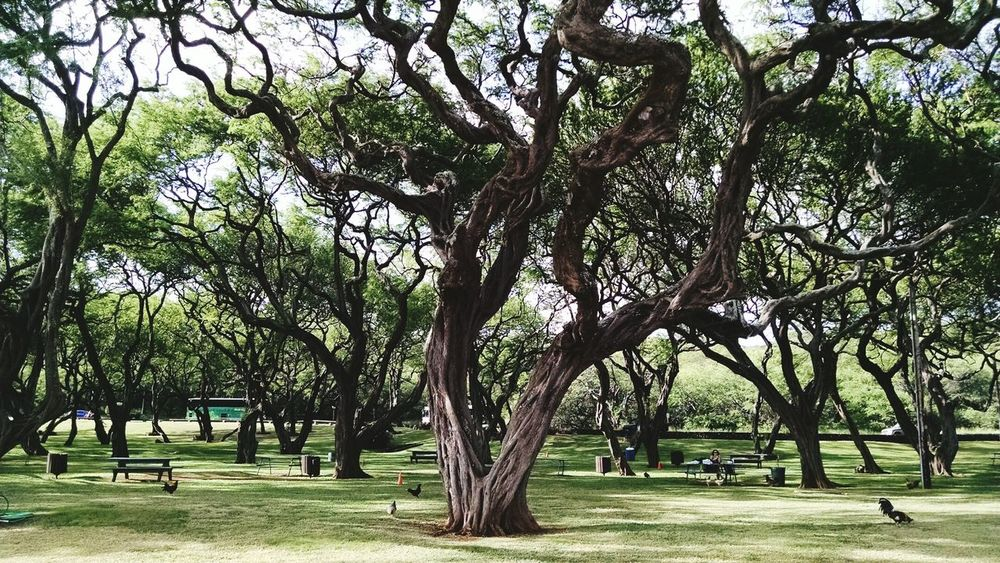 Amazing trees , Honolulu, Hawaii Nature Trees At The Park Hanaumabay Hanauma Bay The Great Outdoors - 2015 EyeEm Awards