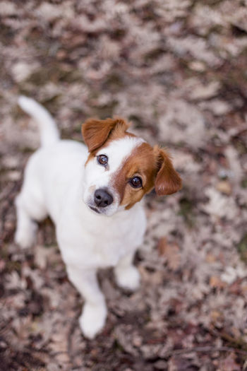 High angle portrait of puppy standing on field