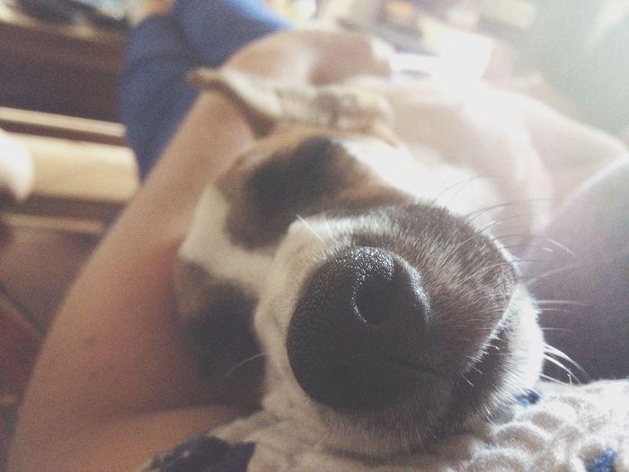 Mon Amour Amore Mio Sweet Sleeping Dog Nessuno Come Te