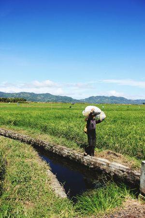 Farm Life , Farmers , Urban , Villagelife , Villager , Strong , Hardworking , View , Sky , Taking Photos Minahasa Green Blue