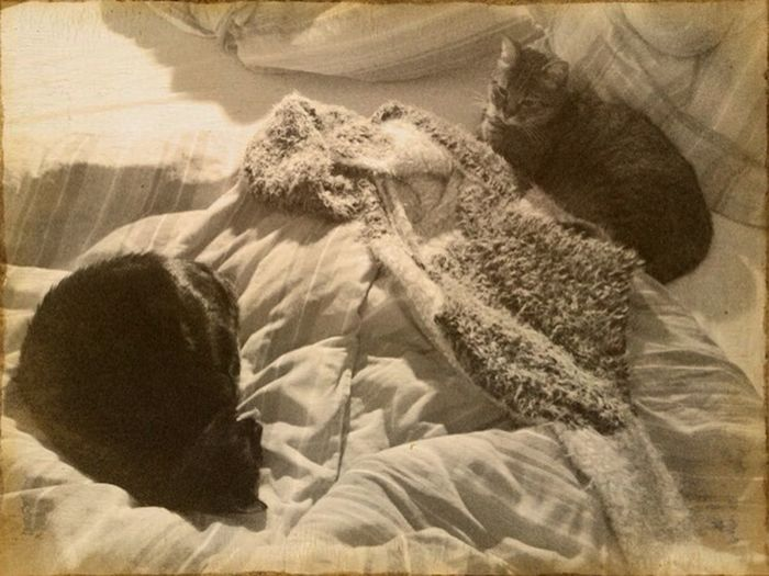 Goodnight Hopeless Occupation Mycatsmybedmyrules