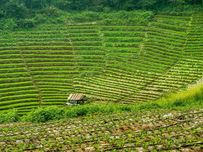 Chiang Mai | Thailand Farming Hills