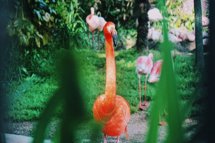 Stand out! Focus Zoo Japan Wildlife Wildlife & Nature Wild Animal Themes Vertebrate Animal Flamingo Animals In The Wild Animal Wildlife Bird Plant Nature No People Growth Day Outdoors Close-up Group Of Animals Beauty In Nature Green Color Focus On Foreground Water Animal Neck