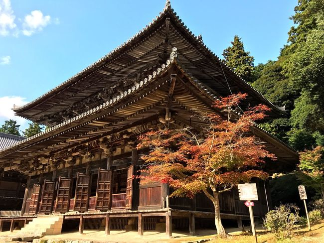 """Ancient wooden temple with autumnal tree at Engyō-ji- filming location for """"The Last Samurai"""". Architecture Building Exterior Outdoors Tree Sky Autumn Fall Fall Colors Japanese  Blue Sky Wood Temple Wooden Traditional Temple - Building Japanese Architecture Japan Ancient Architecture Japanese Temple Old"""