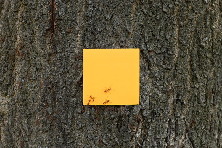 Close-up of ants on yellow adhesive note stuck to tree