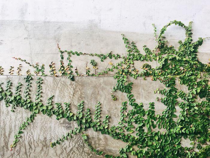 Leafs Art Wall