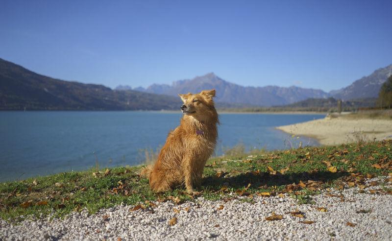 Animal Blue Brown Dog Half Caste Italy Lake Mammal Mestizo Mountain One Animal Outdoors Pets Portrait Santa Croce Pet Portraits