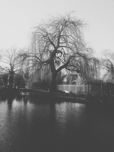 tree B&w Nature AMPt Community NEM Black&white Nature_collection