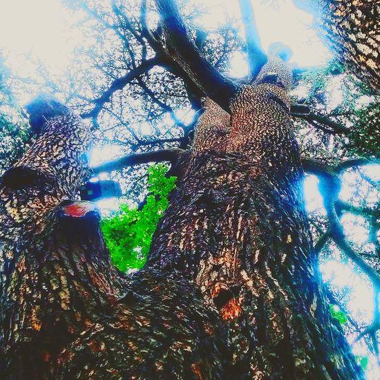 Il n'y a qu'une fois que tu es en haut que tu peux aider les autres à monter... PhotoByMe Paradise Arbre De Vie...