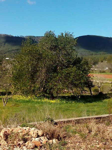 The Places I've Been Today , Tree, Algarrobo.