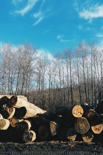 Stack of logs in forest