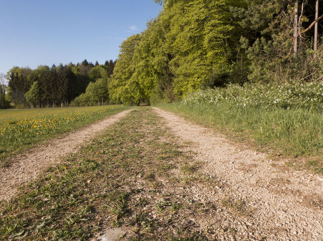 Agriculture Albsteig Hiking Diminishing Perspective Direction Dirt Road Environment Footpath Forest Grass Growth Hiking Trail Land Landscape Outdoors Plant Road Scenics - Nature Schwäbische Alb Sky Springtime The Way Forward Tranquil Scene Tranquility Tree