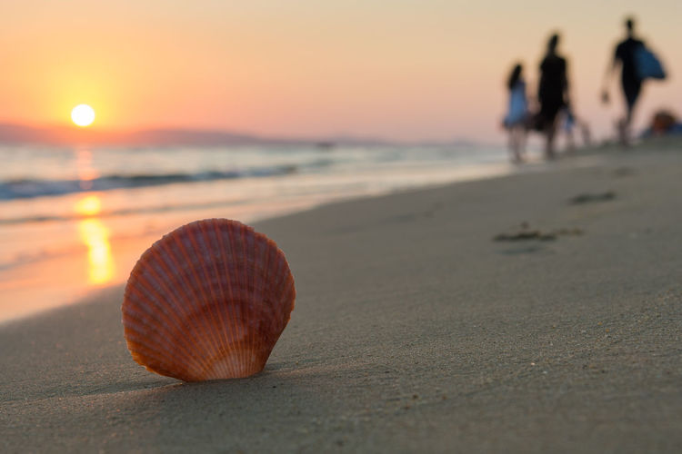 Close up of a seashell while people are leaving the beach at sunset. Selective focus Family FootPrint Holidays Life Reflection Silhouette Summertime Travel Vacations Beach End Leisure Activity Lifestyles People Recreational Pursuit Sand Sea Seashell Seaside Shell Summer Sunset Tranquil Scene Tropical Climate Walking