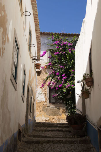 looking into an Alley in Portugal Building Exterior Architecture Built Structure Flower Flowering Plant Building Nature Window House No People Clear Sky Outdoors Sunlight Sky Residential District Wall - Building Feature Alley Day Portugal Alley Photography Street Photography
