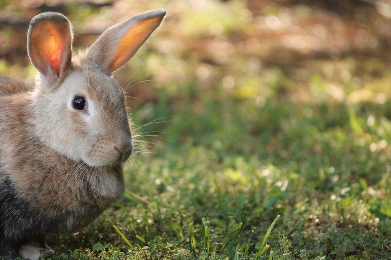 Bunny  Rabbit Animal Cute Nature Animal Photography Nature Photography Canon Murfreesboro Tennessee