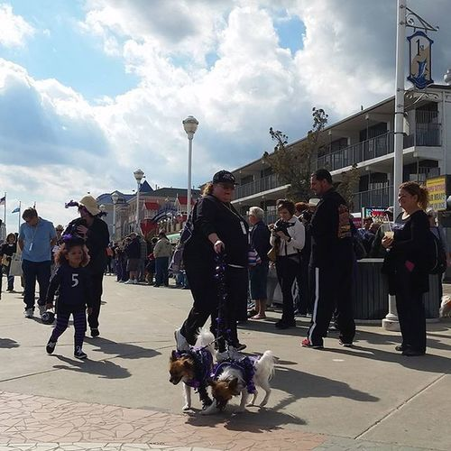 Team Ravens at the Howl-O-Ween Pet Parade.... Oceancitycool OceanCity Maryland