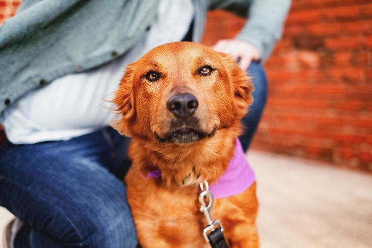 Animal Animal Head  Animal Themes Best Friends Brown Close-up Curiosity Dog Domestic Animals Home Innocence Mammal One Animal Pets Portrait Relaxation Relaxing Sitting