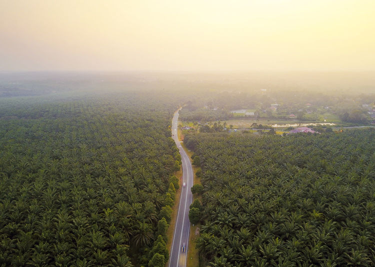 Aerial view of palm plantation during sunrise Palm Tree Aerial View Agriculture Architecture Beauty In Nature Copy Space Day Environment Field Fog Green Color Growth Land Landscape Nature No People Oil Outdoors Plant Scenics - Nature Sky Tree