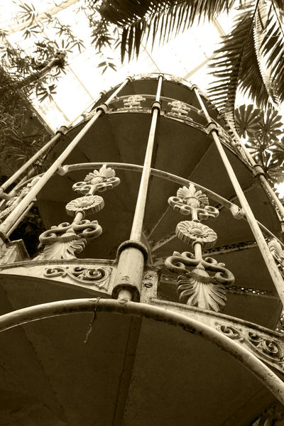 Architectural Feature Greenhouse Kew Kew Gardens Kewgardens Low Angle View Metalwork Palm Tree Sepia Photography Staircase Staircase Perspective Staircases London Kew Palmhouse Kew Palace Greenhouses Botanical Garden Greenhouse Plants Steps And Staircase Kew Gardens, London The Way Forward Green House Spiral Staircase Spiral Stairs Spiral
