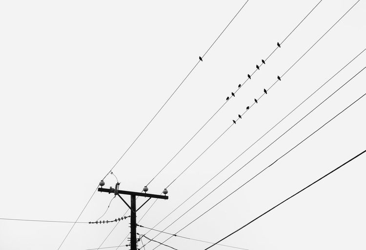 Low angle view of birds on a wire on a foggy day