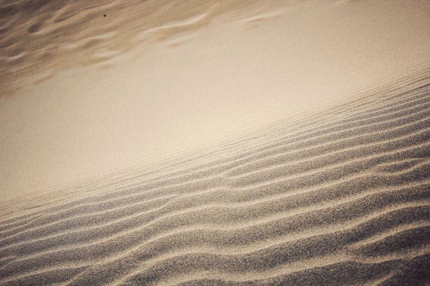 Sand Dunes EyeEm Best Shots 鳥取砂丘 EyeEm Nature Lover Minimalism