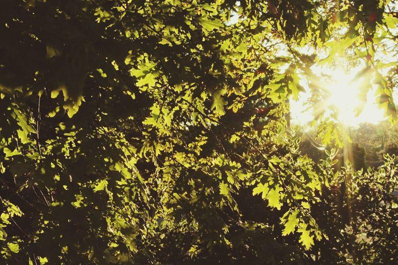Forest Foret Sunshine Sunrise Sunlight
