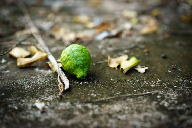 Close-up Day Dry Food Food And Drink Freshness Fruit Green Color Healthy Eating Leaf Leaves Nature No People Outdoors Plant Plant Part Selective Focus Still Life Vulnerability  Wellbeing Wood - Material