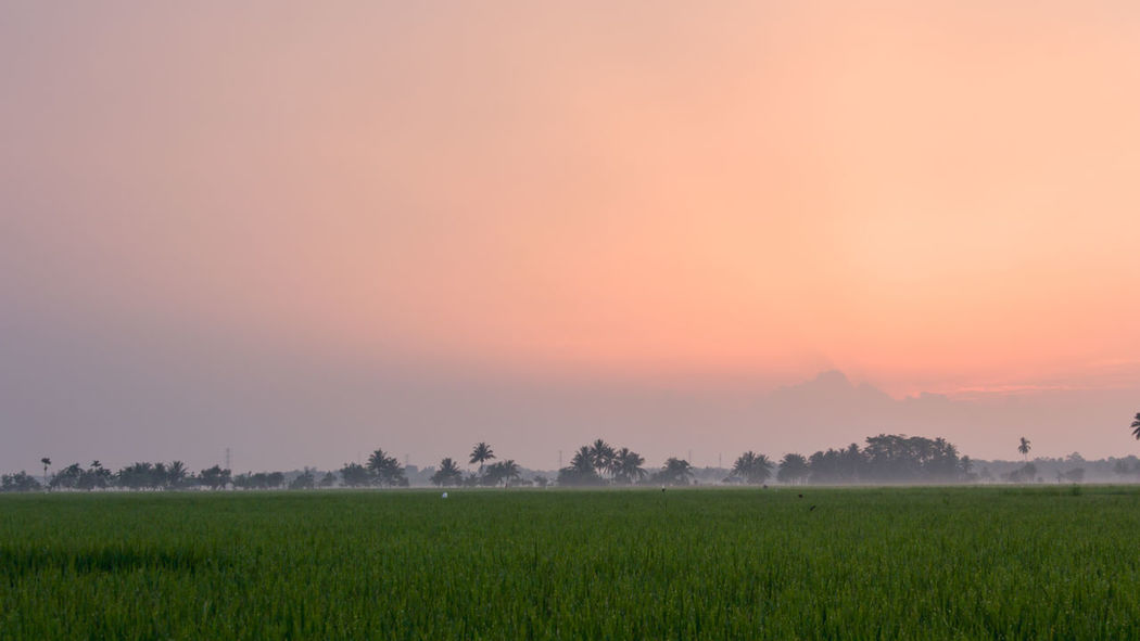 Dawn Field Agriculture Crop  Springtime Freshness Beauty In Nature Condensation Early Morning Nature Tranquility Fog Wet Water Sunset Outdoors Fragility Tree Landscape Rural Scene No People Social Issues Dawn Collection Dawn Of A New Day