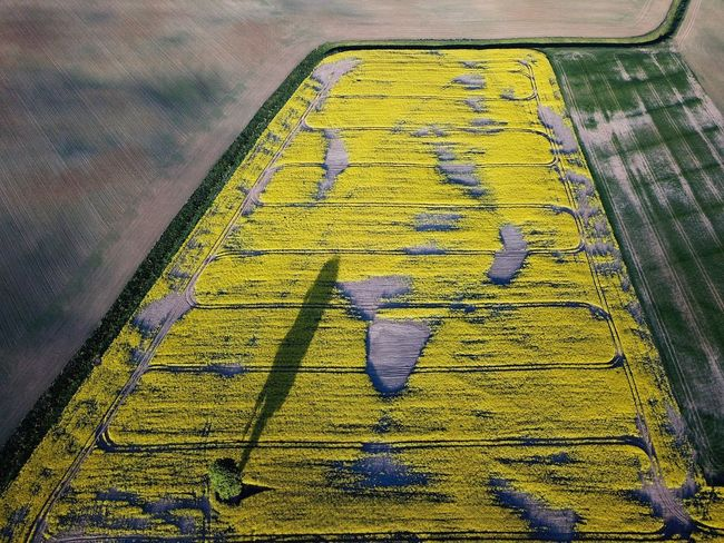 Field Yellow High Angle View No People Pattern Day Art And Craft Close-up Outdoors Nature Green Color