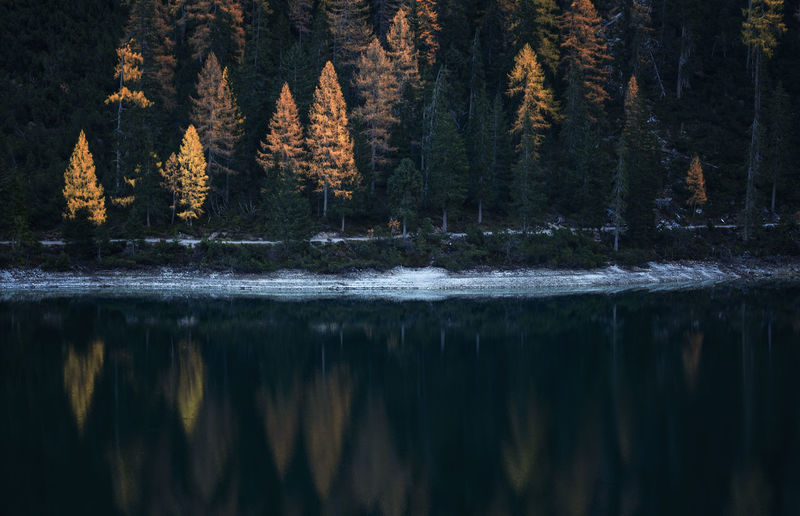 Scenic view of lake in forest at lago di braies in dolomites mountains