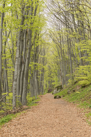 Stay Out Tree Forest Plant Land No People Nature Day Non-urban Scene Outdoors Forest Photography Path In Nature Path Tree Area Green Color Brown Color Forest Pathway Leaves🌿 Colorful Beauty In Nature Beckgrounds Outdoor Photography Mountain Path Beauty Forest And Nature