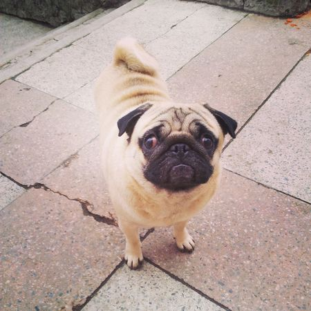 Dog Sweet Biutifull Photo Like This
