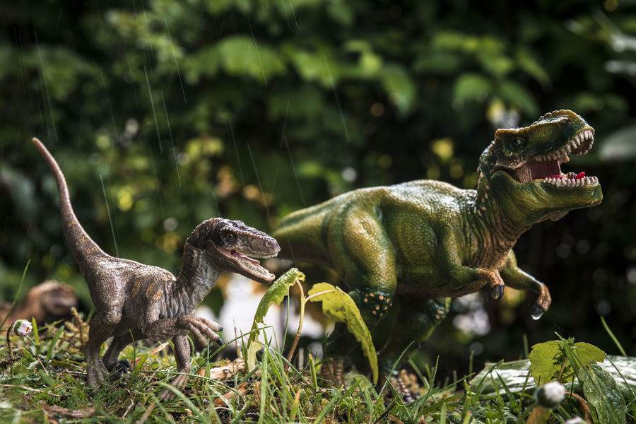 Schleich Dinosaurs Dinosaurs Reptile Schleich Schleich Tiere Animal Themes Animals In The Wild Close-up Day Grass Green Color Growth Jungle Nature No People One Animal Outdoors