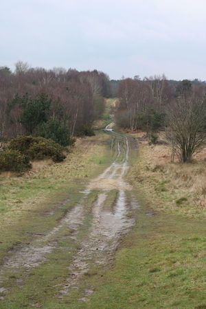Beauty In Nature Chobham Common Countryside Day Grass Landscape Lorry Tracks Nature No People Outdoors Sky Track Tracks Tree Walking