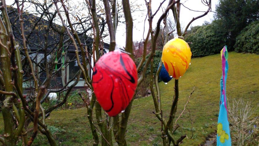 Easter Ostern Osterei Osterdeko Deko Tree Branch Bare Tree Hanging Multi Colored Red Sky Easter Egg Hunt Easter Egg Eggshell