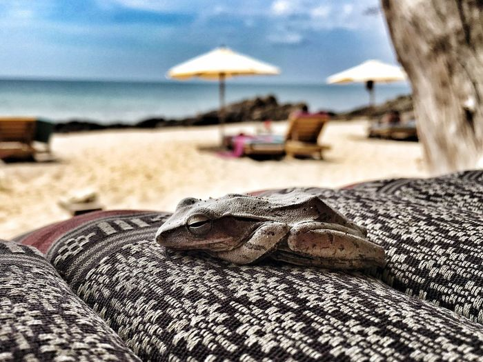 Close-Up Of Frog On Lounge Chair At Beach