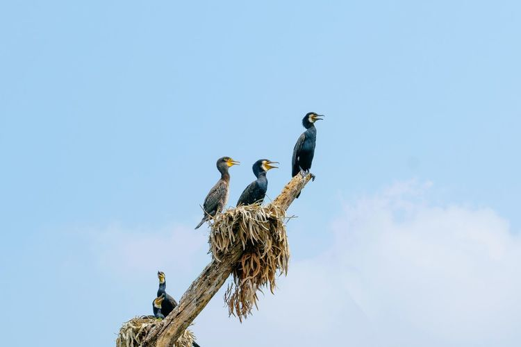 Low angle view of birds perching on nest against sky