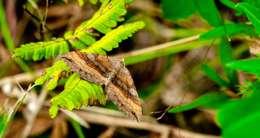 Beauty In Nature Butterfly Close-up Day Forest Photography Insect No People Outdoor Summer