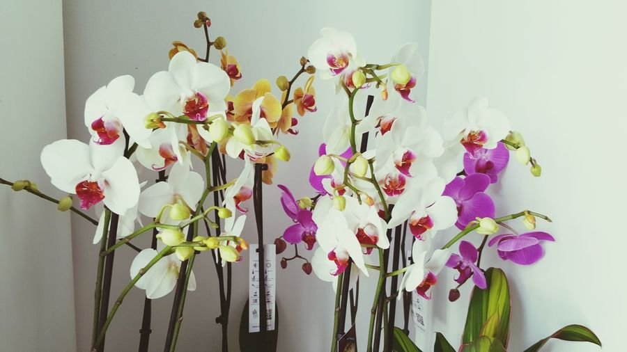 Close-up of orchid flowers for sale at shop