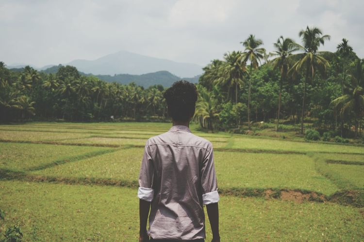 Agriculture Rear View Palm Tree Tree Rice Paddy Field Rice - Food Staple One Person People Nature Growth Adult Rice - Cereal Plant Landscape Rural Scene Adults Only Sky Only Women Outdoors Human Back Travel Destinations Standing Vacations EyeEm Diversity EyeEm Best Shots - Nature