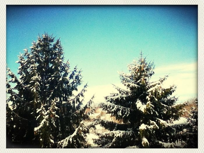 #snow #trees #wakeup #to #this #cool
