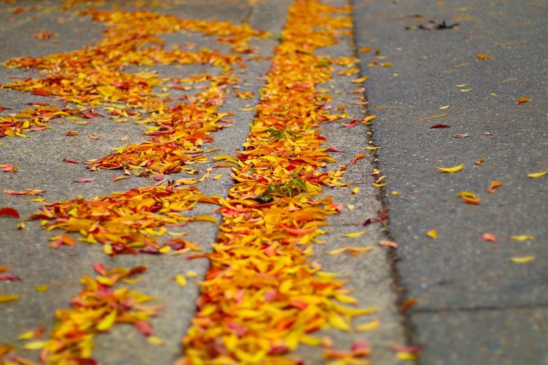 Autumn leaves fallen on road