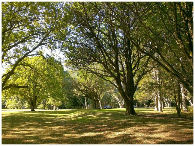 Morning in the park. Hugging A Tree Enjoying Life Taking Photos Check This Out 2015 02 28