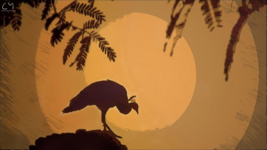 Silhouette Bird Sunset First Eyeem Photo