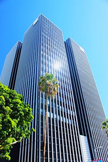 Architecture Modern Building Exterior Skyscraper Built Structure Low Angle View Growth Day Outdoors City No People Clear Sky Blue Tall Tree Sky Office Park
