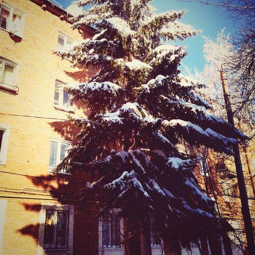 ёлка гуляем дерево елочка снег зима мороз фото лайк холодно ⛄⛄⛄❄❄❄