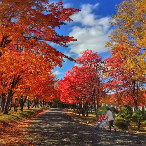Red Leaves Autumn Beauty In Nature Change Day Full Length Growth Leaf Leaves Nature Outdoors People Real People Rear View Scenics Sky The Way Forward Tree Walking Wheelchair