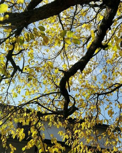 Low Angle View Text Communication No People Day Yellow Tree Outdoors Sky Branch Close-up Nature