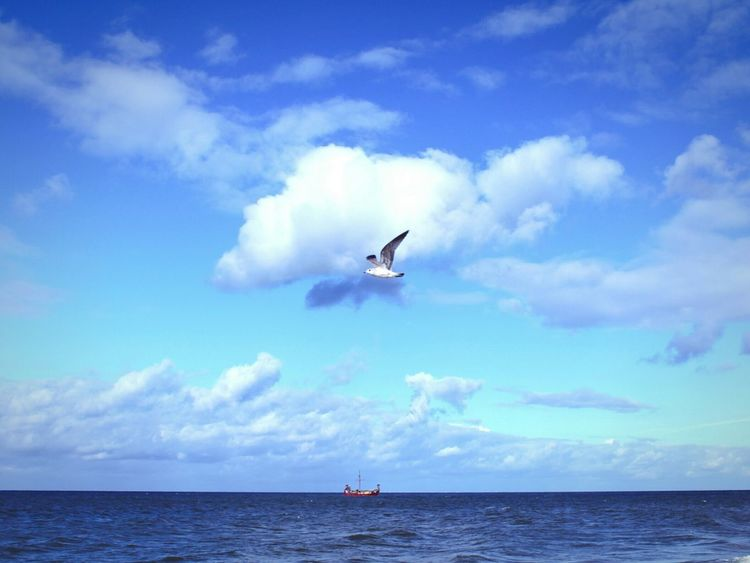 Sea Seaandsky Sky Clouds Seabird Bluesky Ship Shipatsea Capture The Moment Freedom Dream Dreaming Dreamer Surreal Nature Unrealistic Color Palette